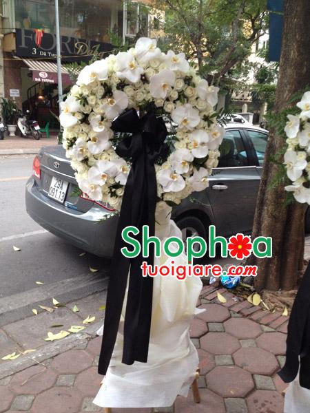 hoa tang lễ lan hồ điệp