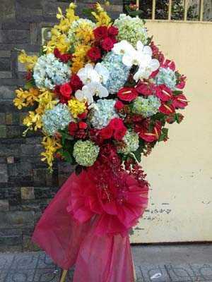 Hoa chúc mừng cẩm tú cầu